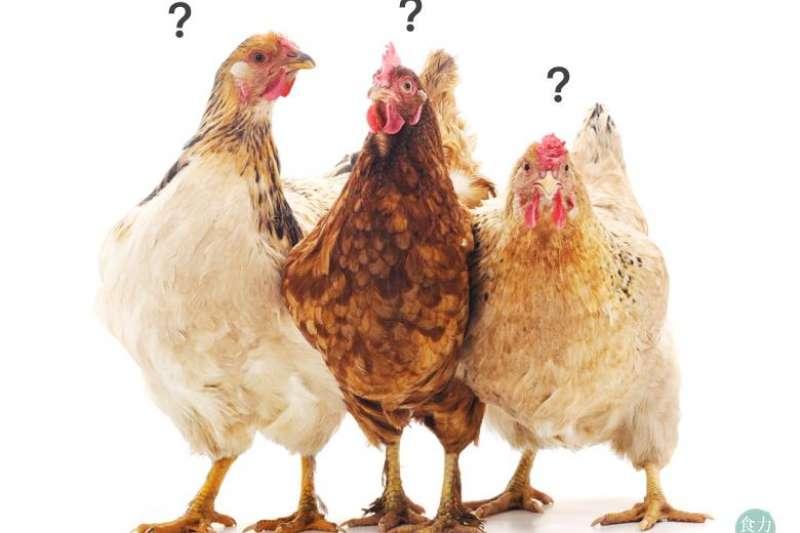 雞精比較營養?我該喝雞精嗎?(圖/食力foodNEXT)
