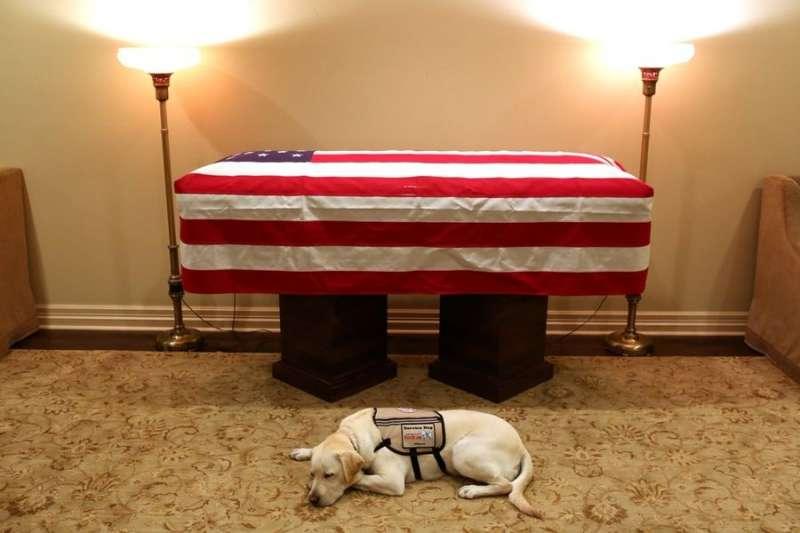美國已故總統老布希的服務犬「薩利」3日返回華府,送主人最後一程。老布希晚年雙腿不良於行,受過訓練的薩利可以幫忙開門、撿東西及求救。(圖取自twitter.com/jgm41)