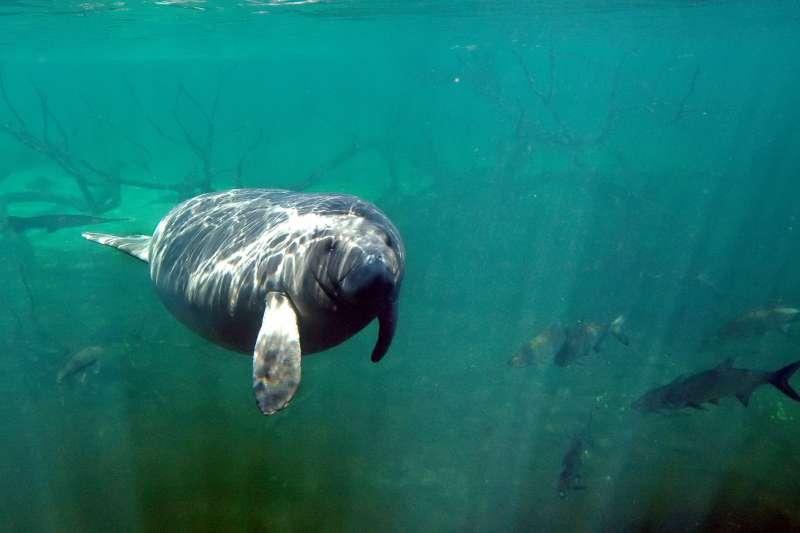 科學研究指出,2.5億年前的古生代二疊紀末期,地球平均溫度急遽上升,造成最多96%的海洋生物滅絕。(AP)
