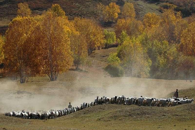 中國塞罕壩國家森林公園秋景。(新華社)