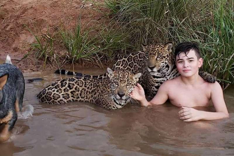 從小和美洲豹一起長大的提戈,最近因為一張與美洲豹「搭肩」合影的照片竄紅網路,原本許多網友很擔心他的安危,但在聽聞他們一家與美洲豹深厚的情誼之後,都深受感動。(圖/BBC提供)
