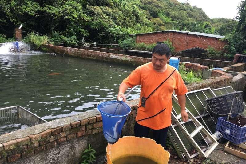 農業局執行「未上市水產品產地監測」計畫,針對轄內養殖戶(包含陸上魚塭及淺海養殖)進行上市前水產品抽驗工作,養殖戶也協助鱘龍魚採樣進行。(圖/新北市農業局提供)