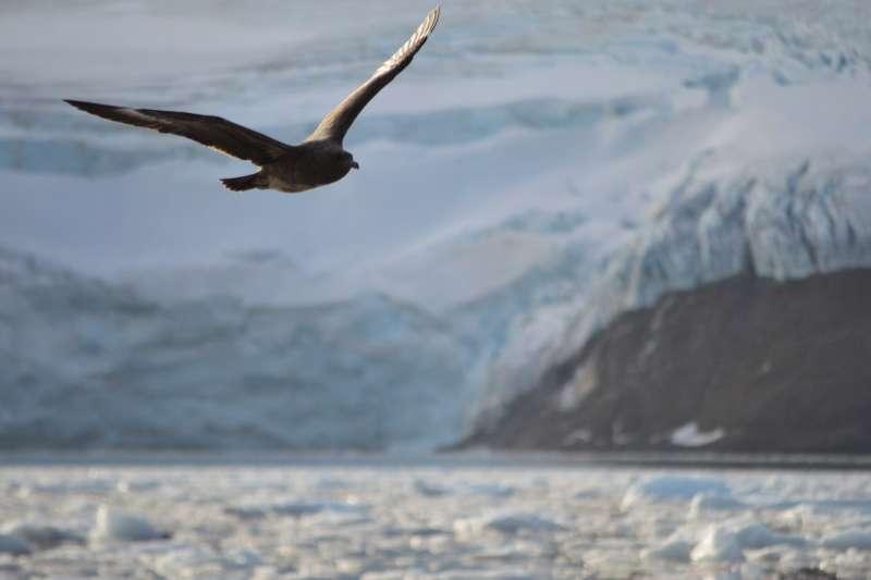 南極的海鳥。(Edu_Ruiz @Pixabay)