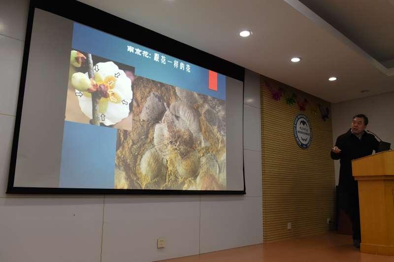 「南京花」與現代花朵的對比圖片(新華社)