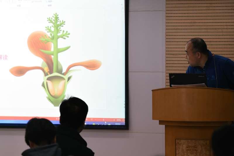 在中國科學院南京地質古生物研究所舉行的「南京花」研究成果發佈會上,該所副研究員傅強展示「南京花」復原圖。(新華社)
