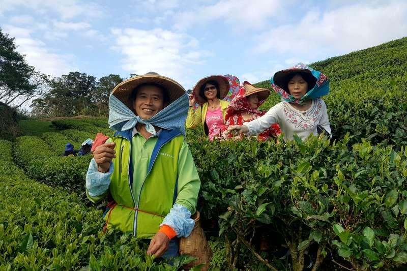 作者指出,台灣農漁產品在內需市場有限的情況下,除了源頭管控外,需要開拓國外市場來穩定供需和價格。(資料照,新北市農業局提供)