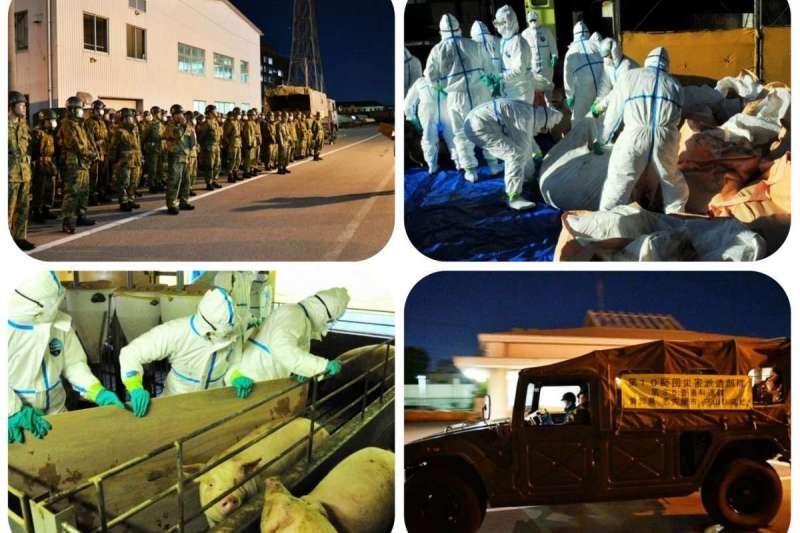 自衛隊25日出動協助撲殺染病豬隻。(翻攝日本政府官網)