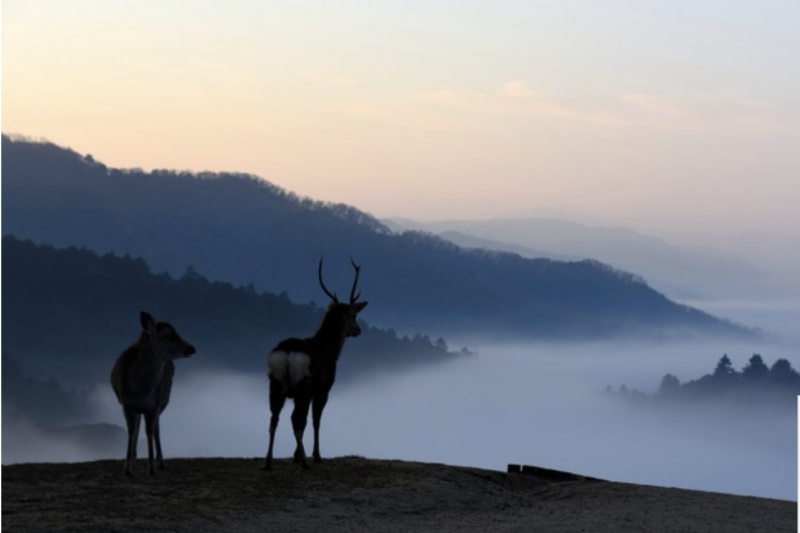 圖為御蓋山(右下),一直到山頂附近都被雲海覆蓋=攝於12月21日。聳立於奈良市・春日大社及東大寺以東的若草山,出現如夢似幻的遼闊雲海景緻。(圖/潮日本提供)
