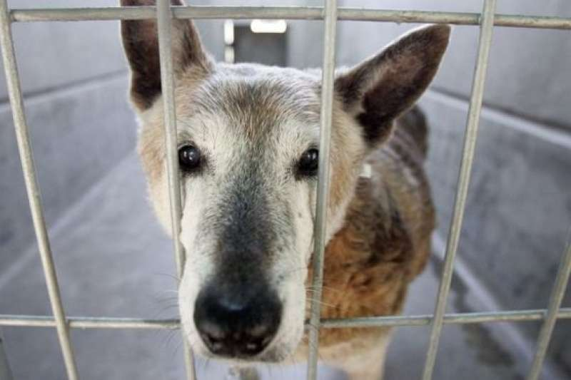 以繁殖寵物營利可能引起動物長期的情緒和健康問題。(BBC中文網)