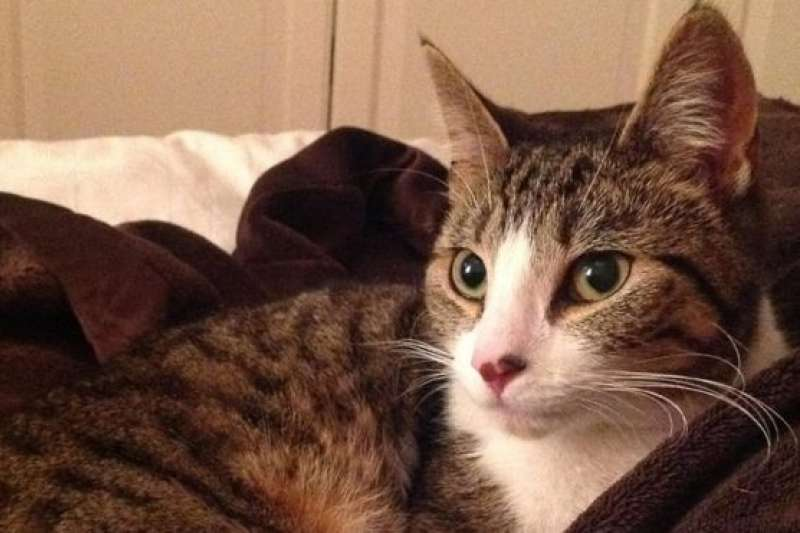 英國一隻曾走失5年的貓羅克西(Roxy)。(BBC中文網)