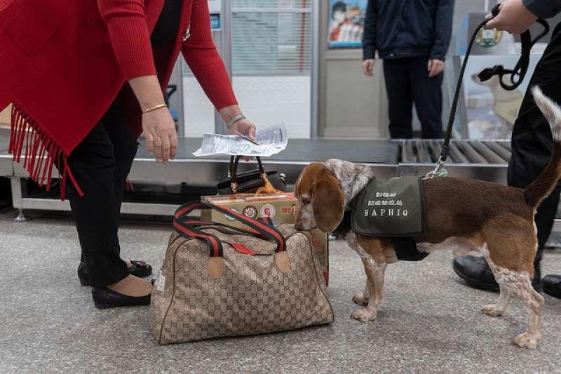 20190104-總統蔡英文視察金門水頭碼頭非洲豬瘟及相關疾病入侵作為。檢疫犬。(總統府提供)