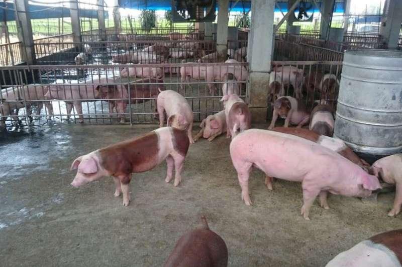 全台灣各地養豬場全力防範非洲豬瘟