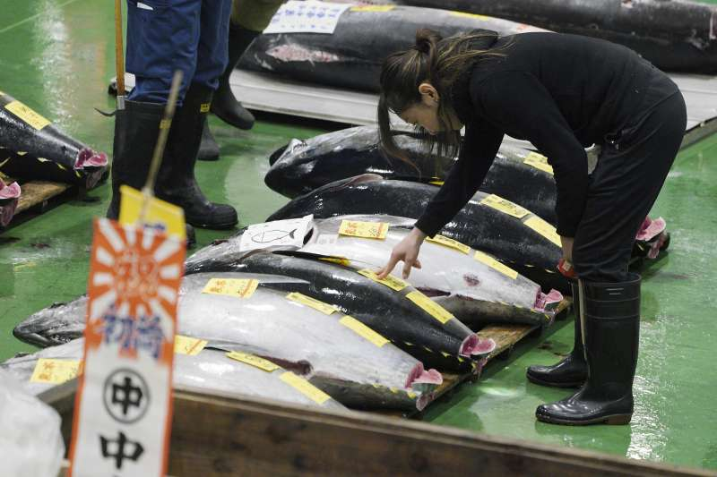2019年1月5日,日本豐洲市場新年拍賣鮪魚。(AP)