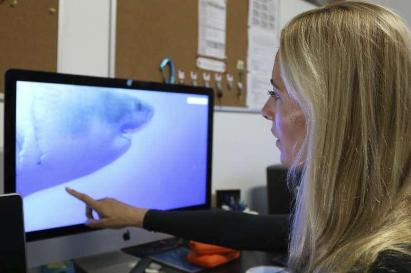 拉姆齊向媒體表示,團隊成員都經過長時間訓練,並仔細研究過鯊魚行為。(美聯社)