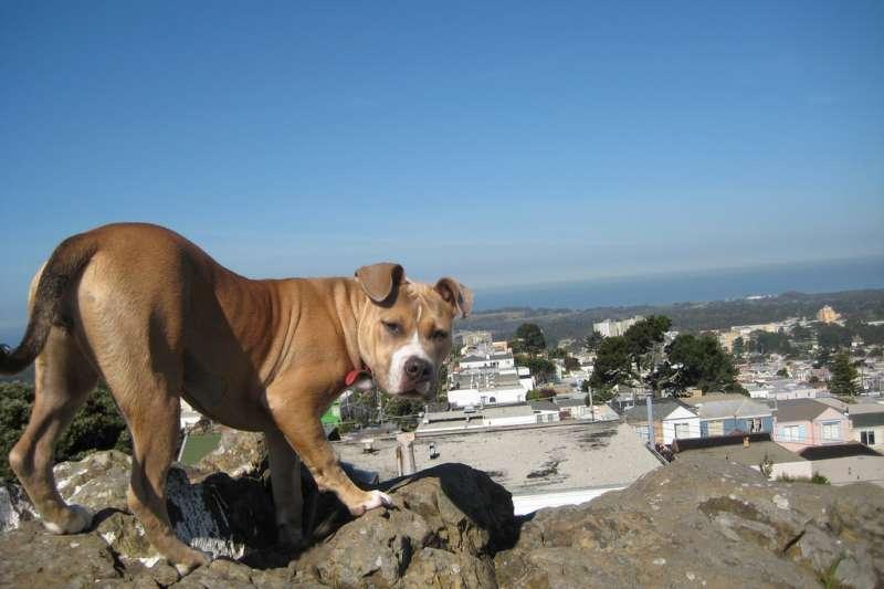 一旦遇到犬隻威脅,切記不要高舉雙手大叫,犬隻看到獵物掙扎反而會更興奮。(取自flickr@Amy)