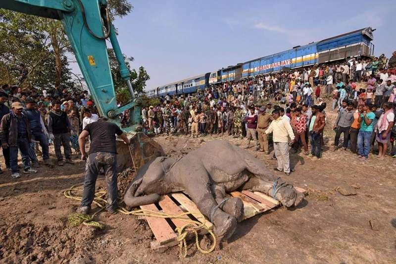 人象衝突在印度阿薩姆邦持續上演。當地土地肥沃且森林茂密,既是近 6,000 頭野生大象的家園,亦是 3,000 萬人的居住地。(圖/*CUP)