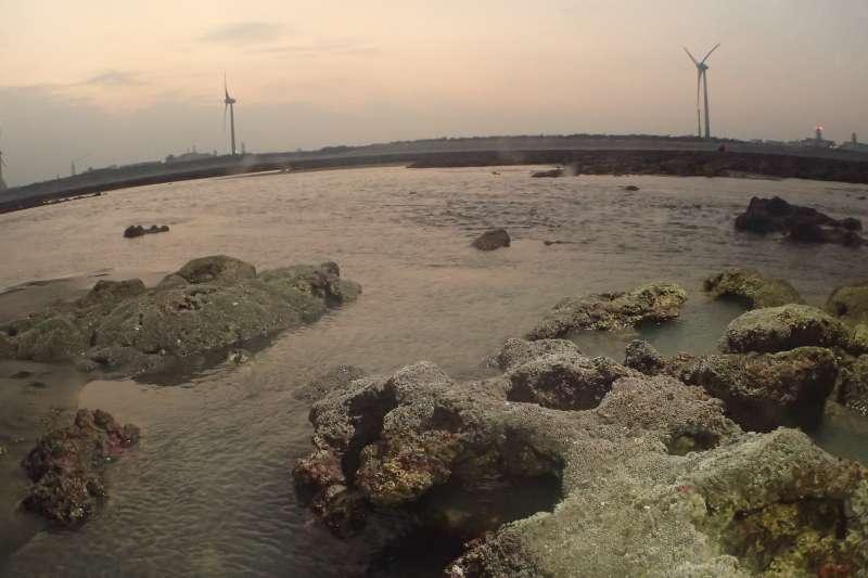 國際知名的海洋保育組織「MIssion Blue」(藍色任務)也把大潭藻礁列入全球「Hope Spots」(希望熱點),更是東亞地區首次上榜的熱點。(資料照,陳昭倫提供)