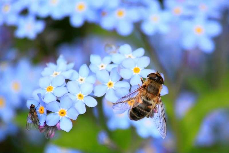 一份最新科學評論指出,全球昆蟲數量銳減,蜜蜂數量也大幅減少。(取自Pixabay)