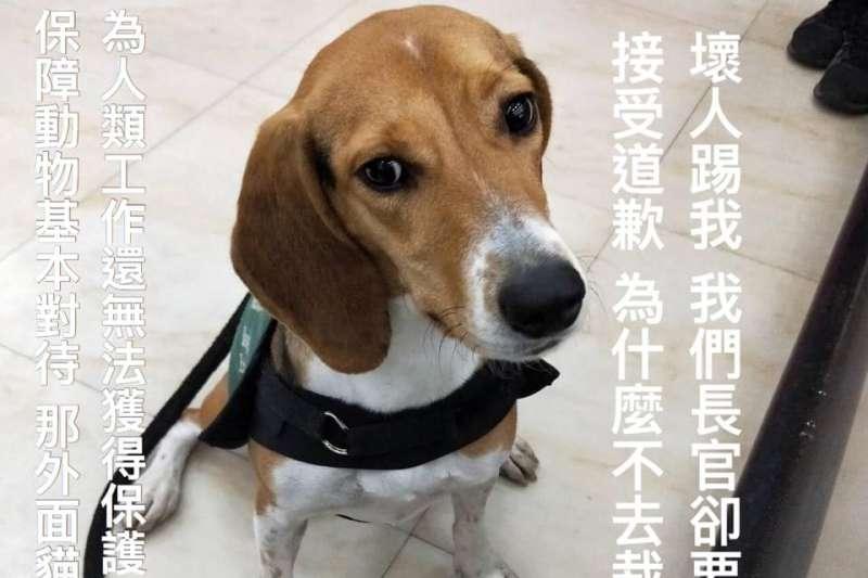 移民署高雄航空站陳姓移民官,9日深夜疑似因為情緒不佳,突然伸腳踹檢疫犬,讓狗狗當場慘叫一聲。(取自臉書社團「有點毛毛的」)