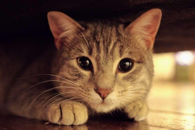 中國貓奴商機大爆發,上海以貓咪為主題的咖啡廳「貓咖」、「擼貓店」愈開愈多,但同時,卻有無良商人趁機而入,一群貓咪陷入悲慘境遇……(示意圖/pixabay)