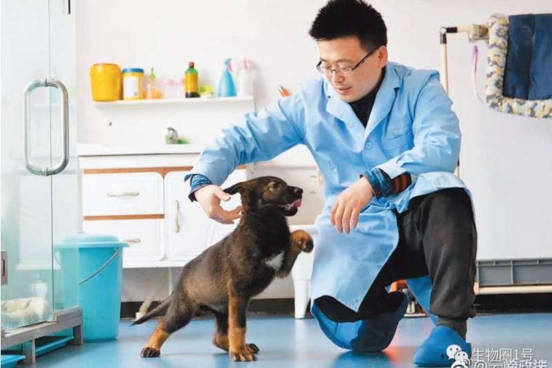 中國首隻基因複製警犬昆勳。(翻攝網路)