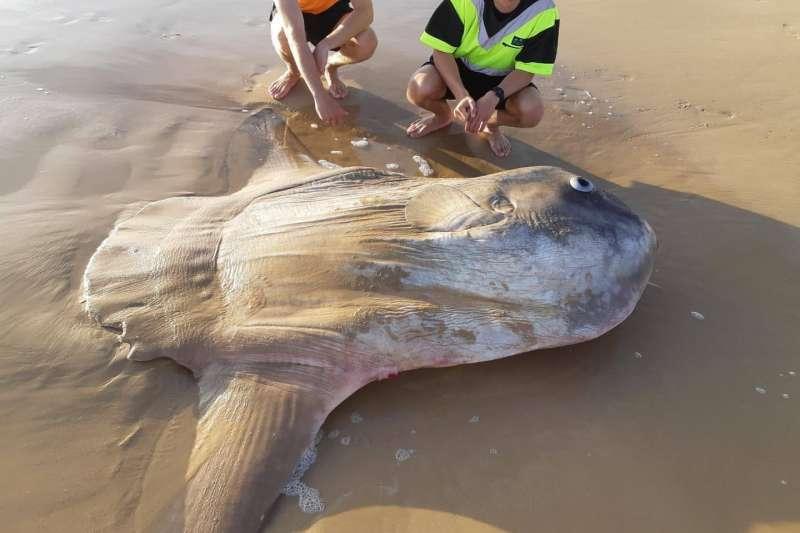 南澳國家公園臉書貼出翻車魚照片。(BBC中文網)