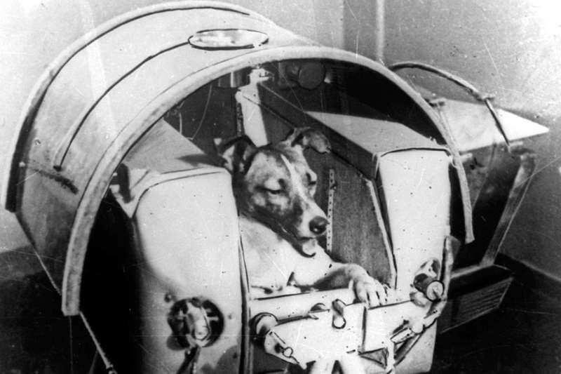 早在1950-60 年代,蘇聯科學家就曾嘗試「訓練」太空狗。(圖/*CUP)