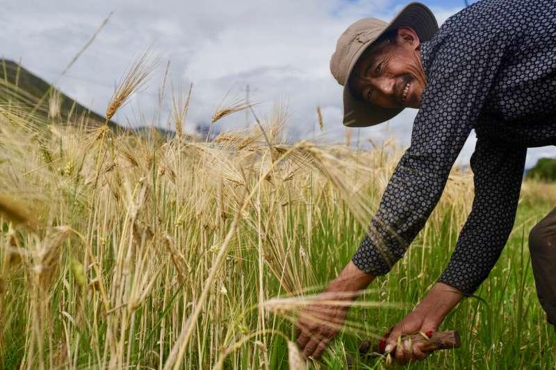 灣農業施政偏重在讓農民立即有感的福利措施及農產外銷市場拓展,用於農業新科技研發及新商業模式建立的經費偏低。(資料照,新華社)