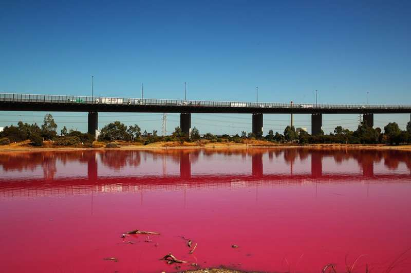 澳洲墨爾本一處公園中,因為陽光、雨水和溫暖的空氣形成了粉紅色湖泊,成為遊客的打卡熱點。(BBC中文網)
