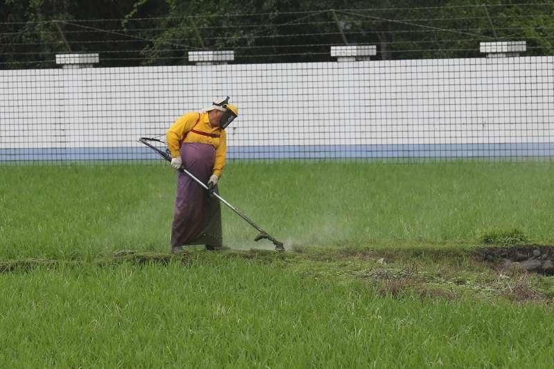 高效率的農業機具,可大幅降低人工需求及成本。林瑞慶/攝影