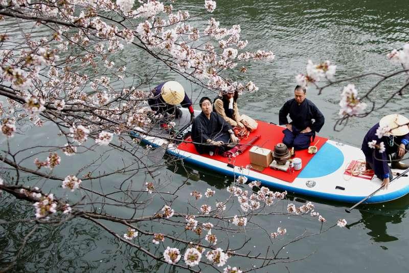 日本橫濱盛開的櫻花。(美聯社)