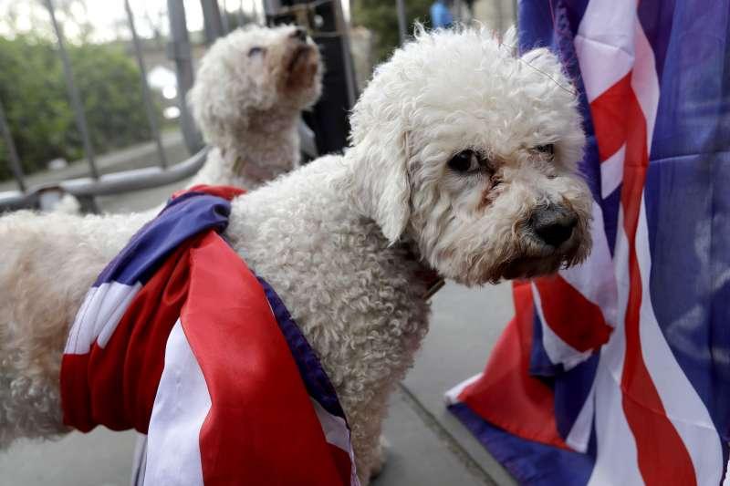 英國到底要不要脫歐?狗狗也不耐煩了(AP)