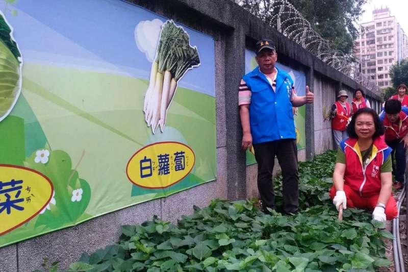 新北泰山區貴和里明志路3段的飛彈指揮部旁,原本髒亂不堪,里長盧東和及志工們花費3年整頓,開闢成有機蔬菜的「樂活園」,讓環境市容煥然一新。  (圖/新北市民政局提供)