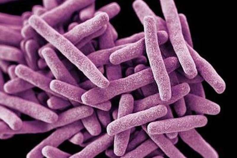 只有多重耐藥的耳念珠菌才是「超級真菌」。(新華社)