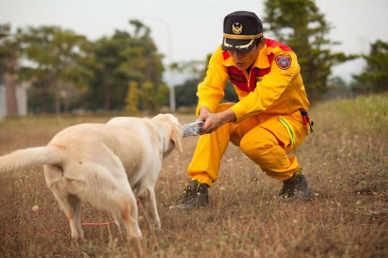 20190422-新竹市消防局特種搜救隊去年派3名隊員前往內政部消防署訓練中心,與搜救犬一對一進行培訓,其中2隻通過初試的搜救犬,將於25日新竹市民安5號演習時亮相。圖為信心訓練。(新竹市政府提供)