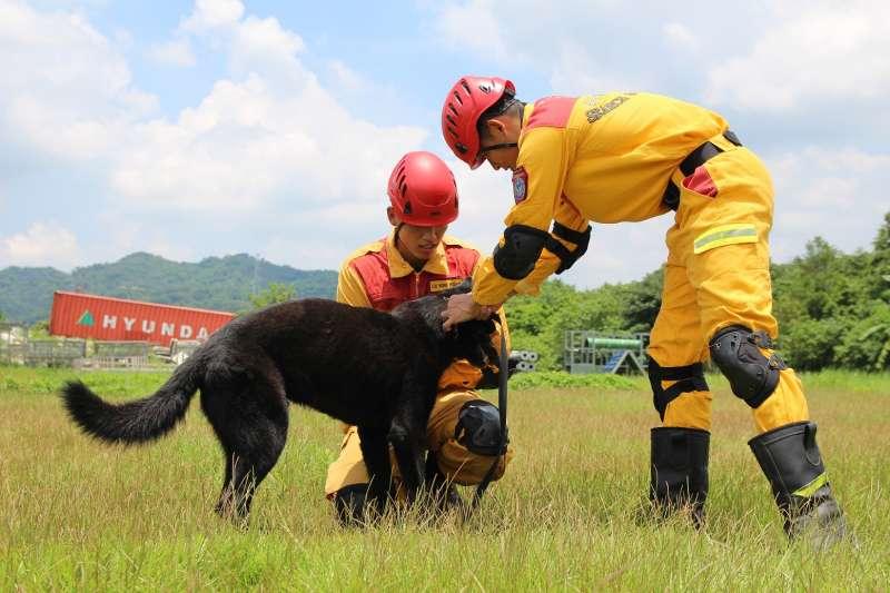 20190422-新竹市消防局特種搜救隊去年派3名隊員前往內政部消防署訓練中心,與搜救犬一對一進行培訓,其中2隻通過初試的搜救犬,將於25日新竹市民安5號演習時亮相。圖為吠叫訓練。(新竹市政府提供)