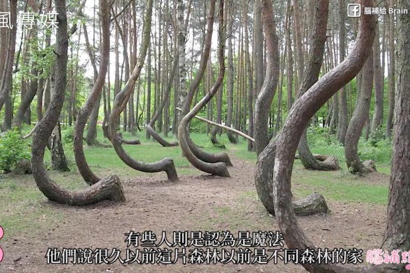 離奇消失的瀑布、會跳舞的森林?5個像謎一般的神秘事件,怪異現象就連科學家都無法解釋