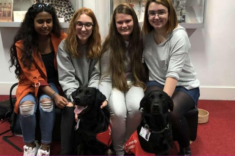 英國大學僱用「教學助理犬」為學生減壓(BBC)