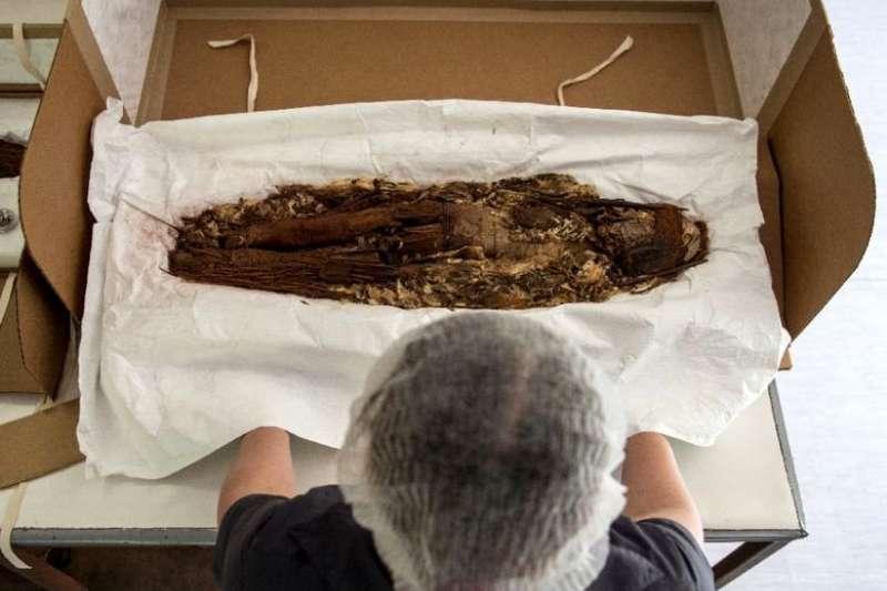 智利人類學者在首都聖地牙哥國立自然史博物館內展示新克羅文化的木乃伊(美聯社)