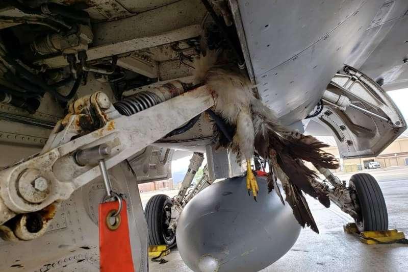 今年4月的F-16鳥擊事故照片。