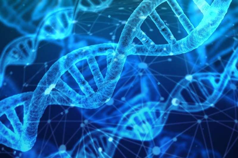 英國劍橋大學科學家重新編寫大腸桿菌的DNA。(pixabay)
