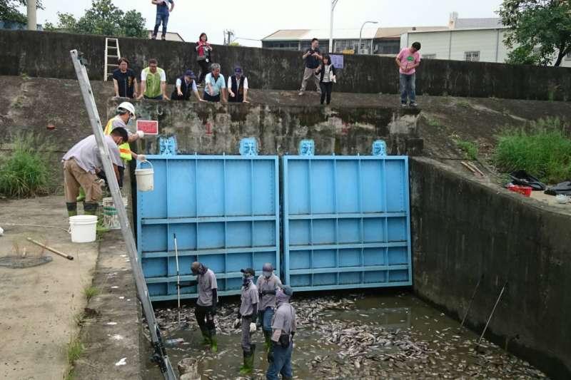 台中市環保局派員協助清理旱溪沿岸的死亡魚群屍體,以免影響環境衛生。(圖/臺中市政府提供)