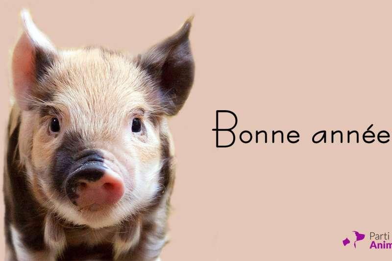 動物黨的選舉宣傳海報不像其他政黨以候選人肖像為主,而是採用貓或狗的照片。(圖/Parti animaliste@facebook)