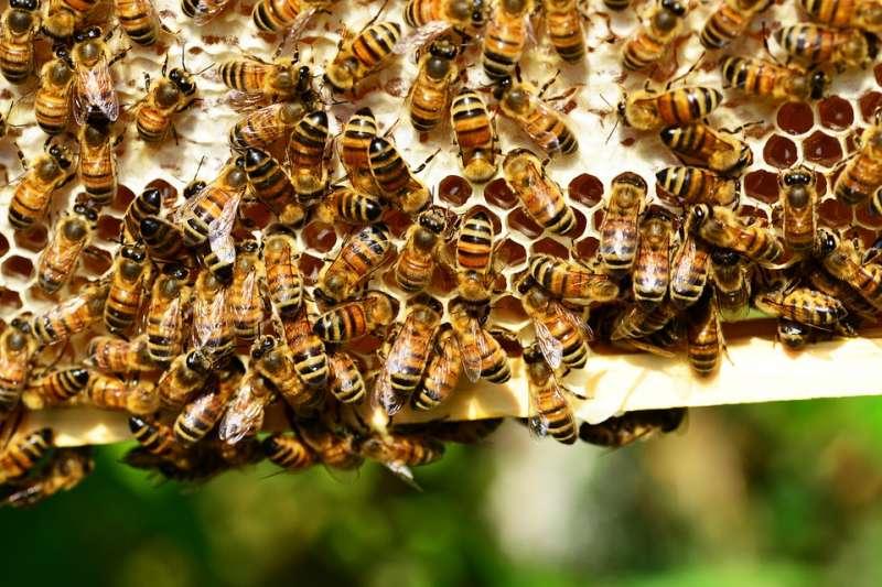 20190602-蜜蜂、蜂蜜、養蜂。(取自PollyDot@pixabay/CC0)