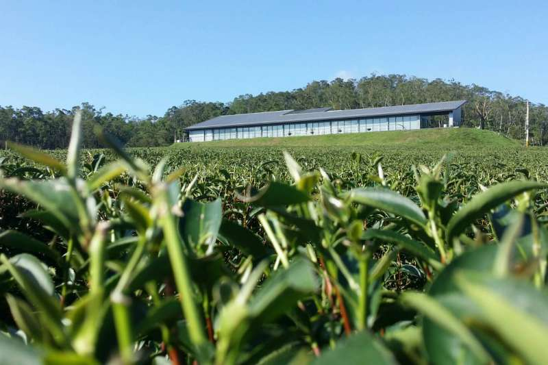 20190604-圖為台灣農林公司的銅鑼茶廠,茶園面積占地30公頃。(取自台灣農林網站)