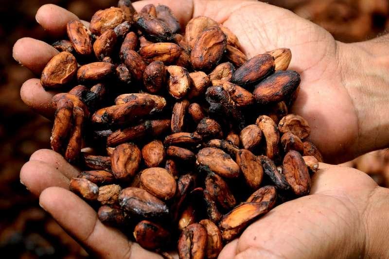 象牙海岸是世界上最重要的可可產地,也是許多巧克力大廠的可可來源,但當地農場雇用童工的情形仍相當嚴重。(示意圖)(圖/Pixabay)