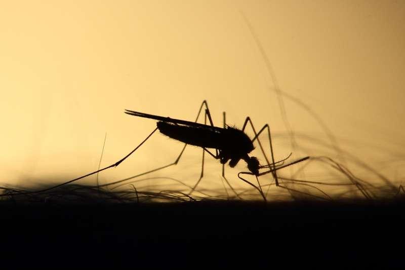 20190619-蚊子、病媒蚊、傳染病、登革熱、日本腦炎。示意圖。(取自Emphyrio@pixabay/CC0)