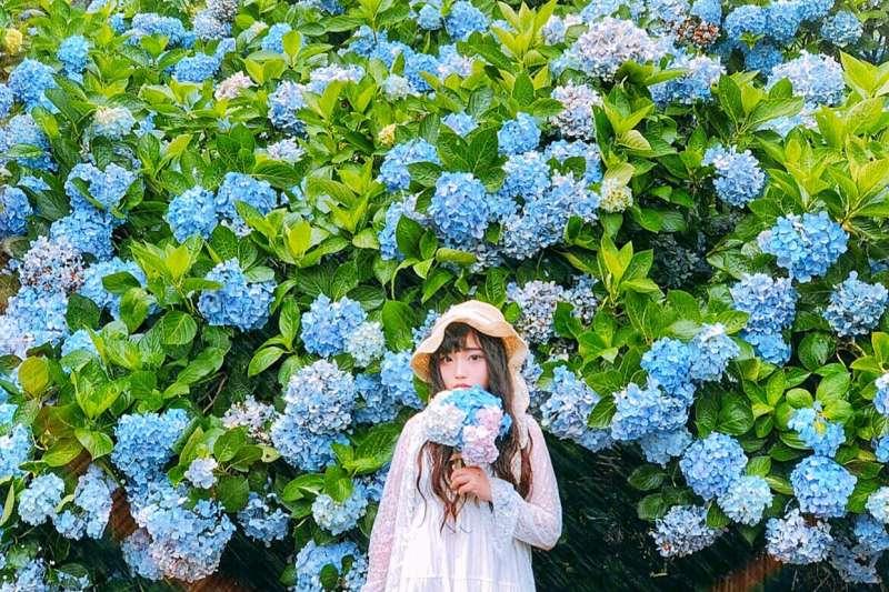 想坐擁浪漫花海不一定要跑到日本,其實在台灣就有很多美麗的賞花仙境值得走訪。(圖/0829ee@Instagram,台灣旅行小幫手提供)