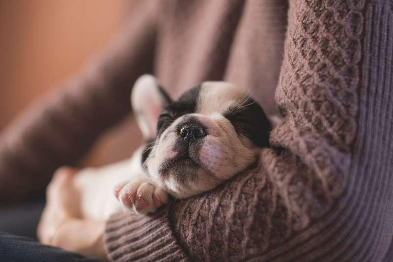 國人家中飼養貓狗寵物的數量已突破250萬大關,對飼主來說,毛小孩就是家人。示意圖。(取自Pexels@pixabay/CC0)