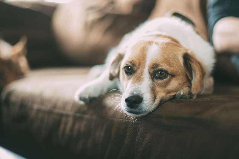動物咬傷擔心狂犬病?「毛小孩」接種疫苗是預防關鍵。(取自Free-Photos@pixabay/CC0)